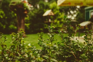 garden hidden1