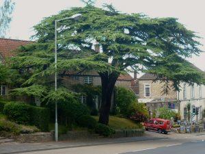 tree sue bucklow