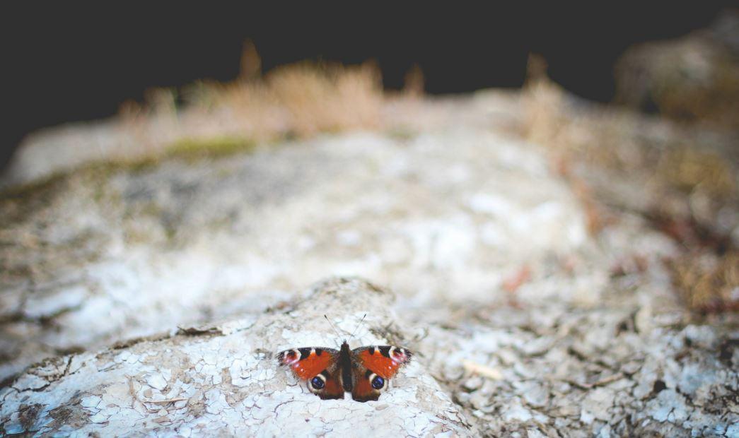 Butterflies Moths Discover Frome