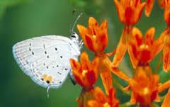 White butterfly on orange flower