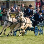 Pony and trap racing at the Frome Cheese show