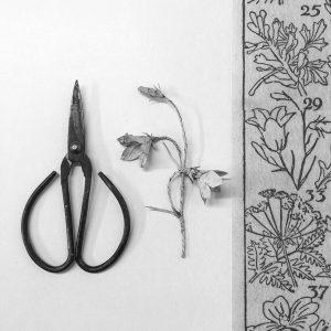 Fiona Hingston Somerset Art Weeks