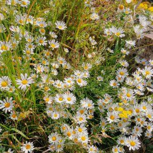 wild flowers in long grass