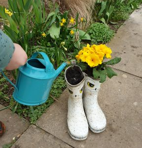 Yellow flowers planted in an old pair of wellies, which are white with owl eyes and feather illustrations. The plants are being watered with a teal watering can.